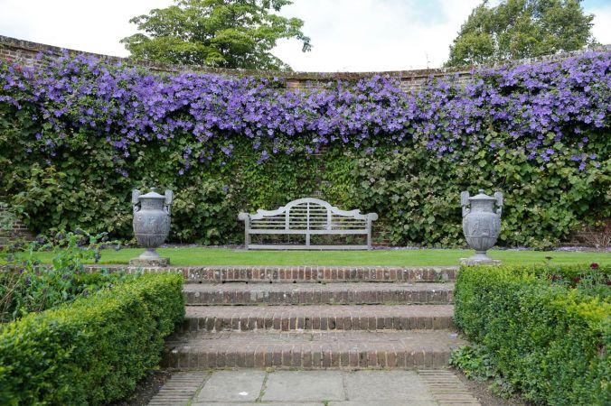 purplevine